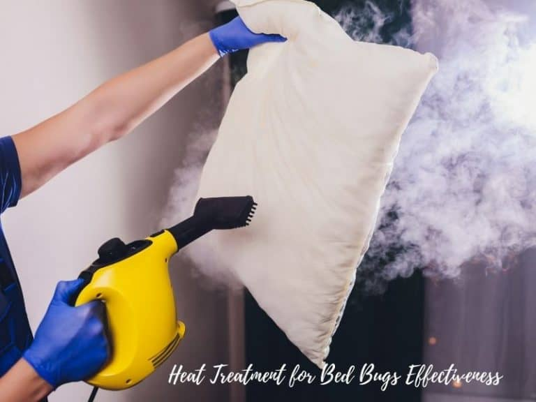 Heat Treatment for Bed Bugs: Effectiveness and Efficiency