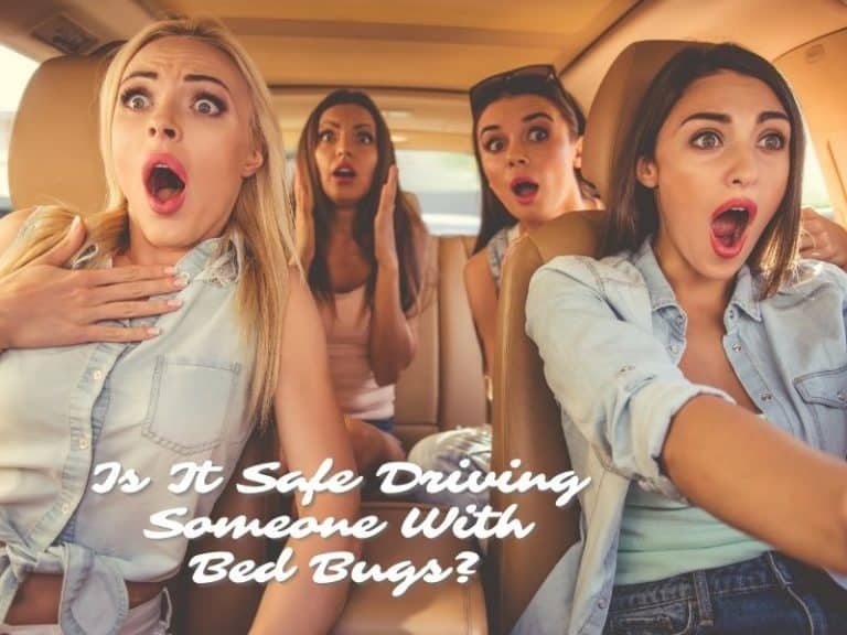 Read This Before Driving Someone With Bed Bugs