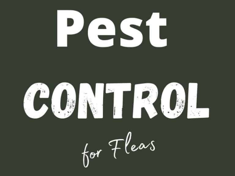 When To Call Exterminators For Fleas?