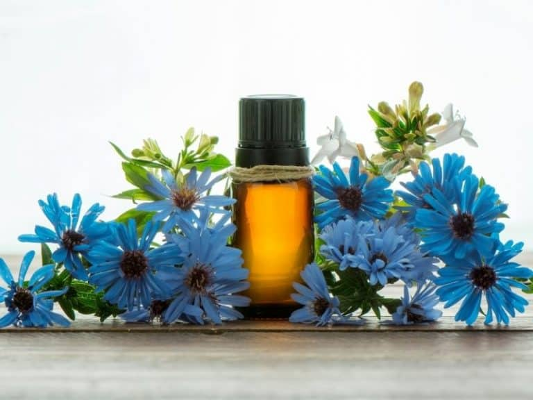 How to Get Rid of Carpet Beetles With Essential Oils Naturally