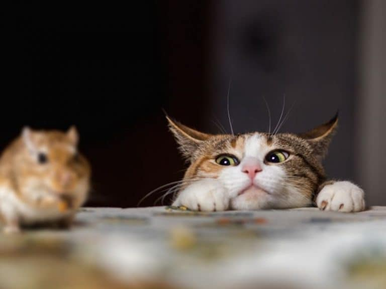 Do Mice Know When A Cat Is In The House?