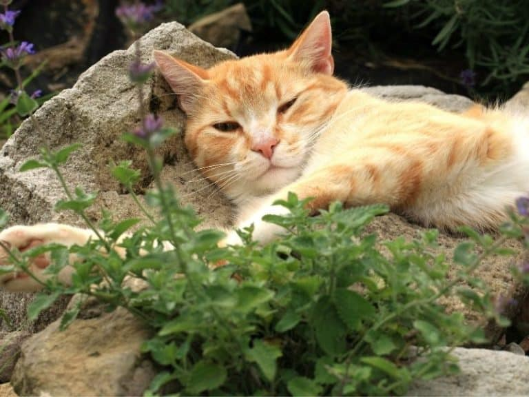 15 Flea-Repelling Plants: Some Are Toxic For Pets