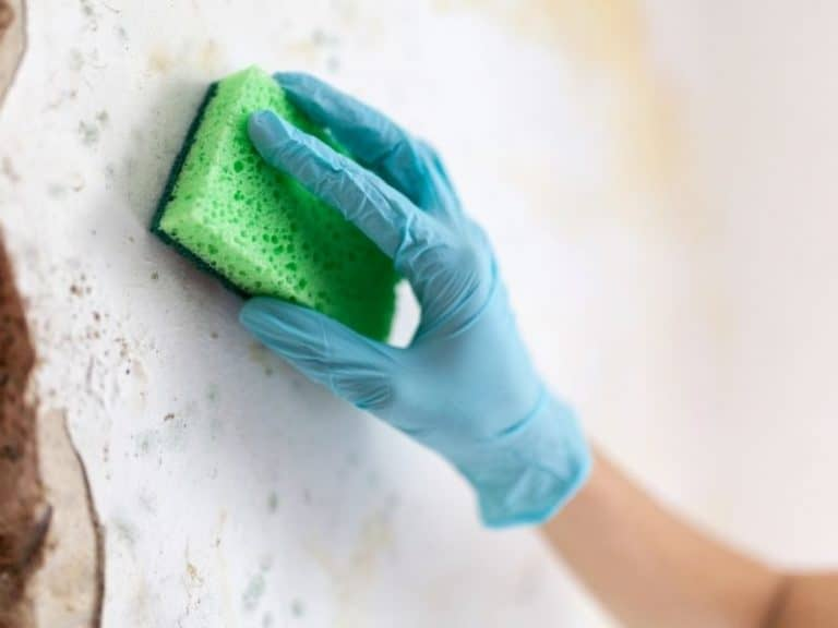 How to Clean Walls After Bed Bugs Fast and Easy