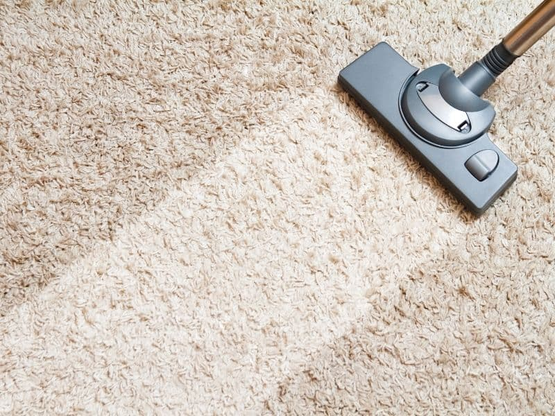 cleaning carpet from fleas