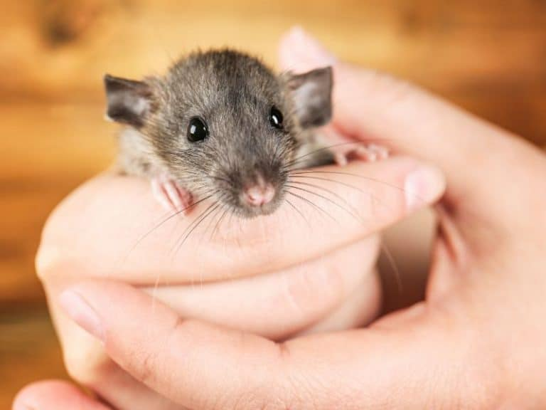 How to Humanely Dispose of a Live Mouse