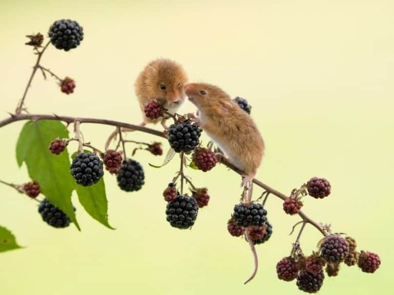 Studies Show There 13 Foods Attract Mice Guaranteed