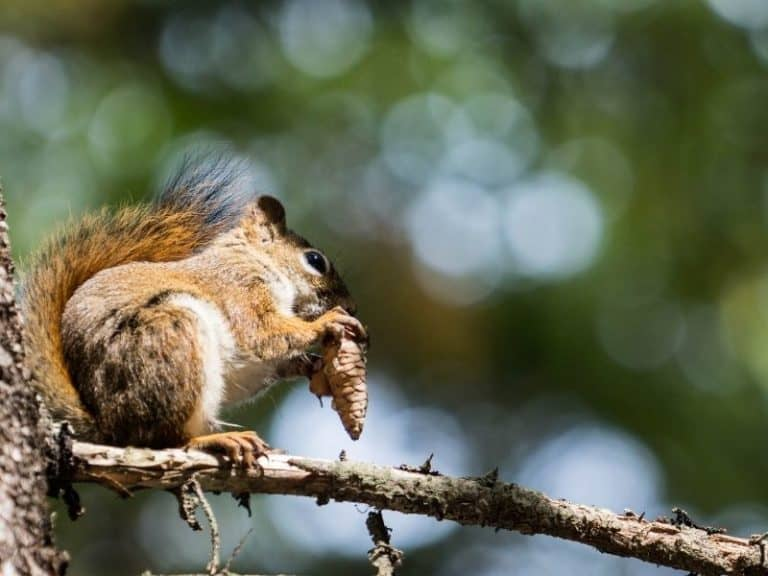 What Foods are Bad for Squirrels?
