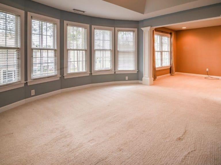 Get Rid of Bed Bugs in Carpet In 5 Easy Steps