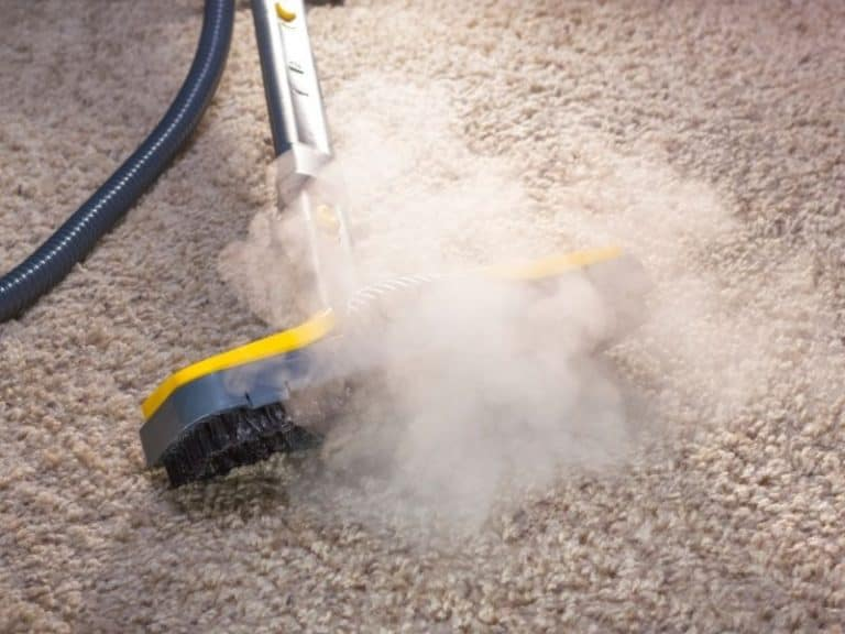 How to Get Rid of Carpet Beetles Organically Without Any Chemicals