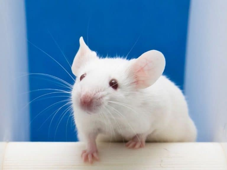 How To Catch Mice Without Killing Them