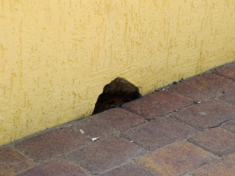 How Long Does It Take A Mouse to Chew Through A Wall