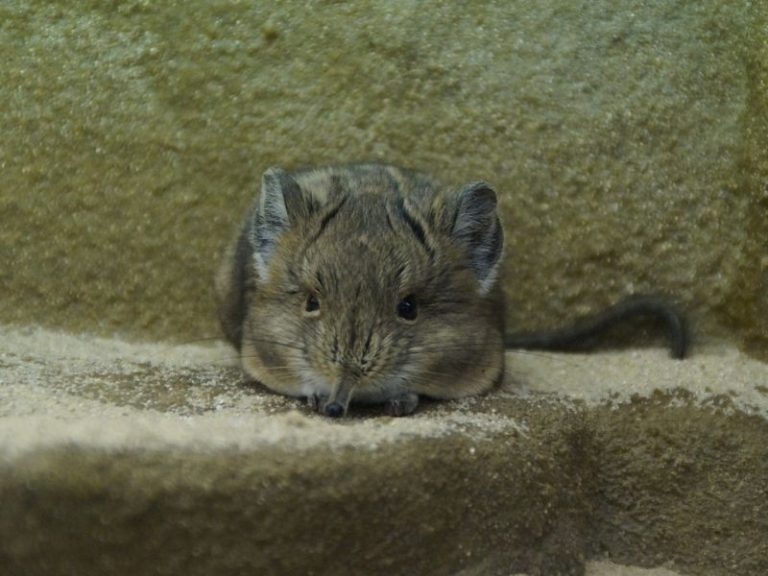 How to Lure Mice Out of Walls