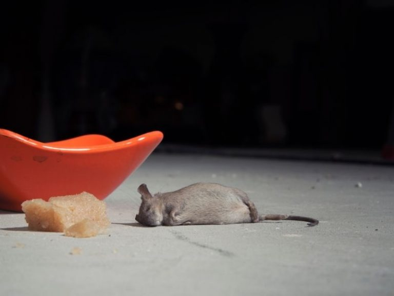 Here's What Happens to Mice When They Eat Poison