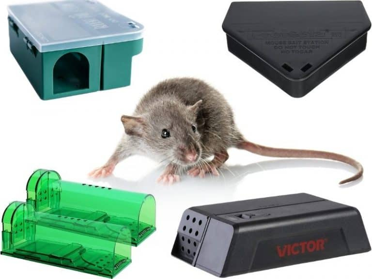 Mouse Poison vs. Traps: Which One Is Better