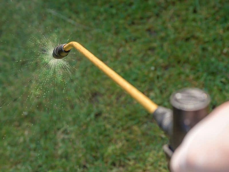 image of pest control tech