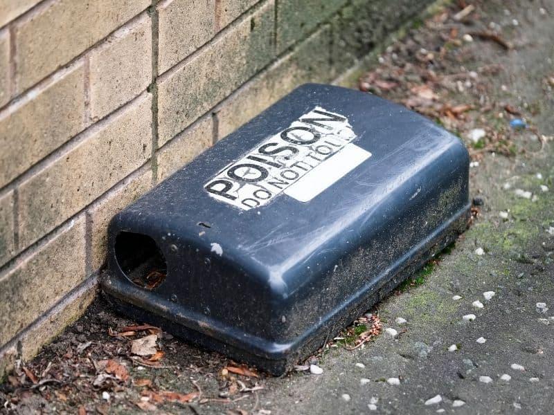image of rat poison
