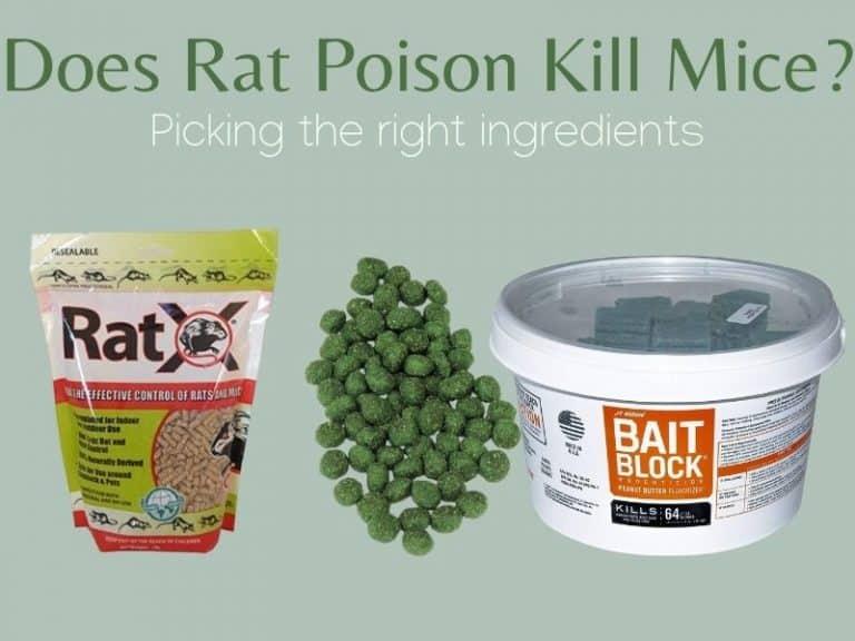 Does Rat Poison Kill Mice?