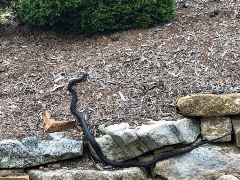 Is There A Snake Repellent That Works?