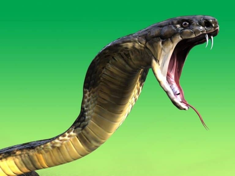 Do Snakes Take Revenge? Here's What Scientists Claim