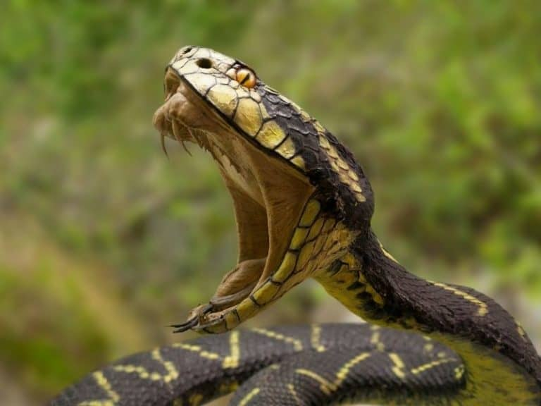 10 Smells That Snakes Actually Hate