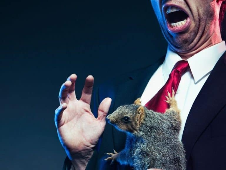 Can Squirrels Attack People or Dogs?