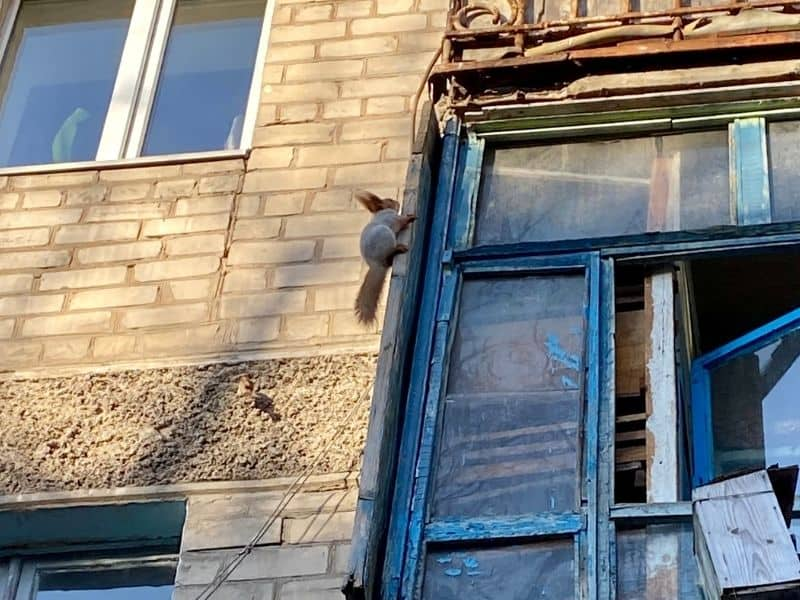 squirrel on balcony