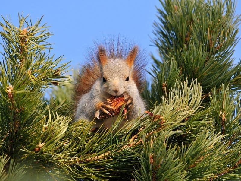image of squirrel eating nuts