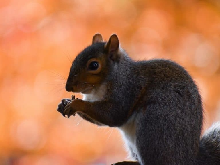 37 Things That Squirrels Like to Eat the Most