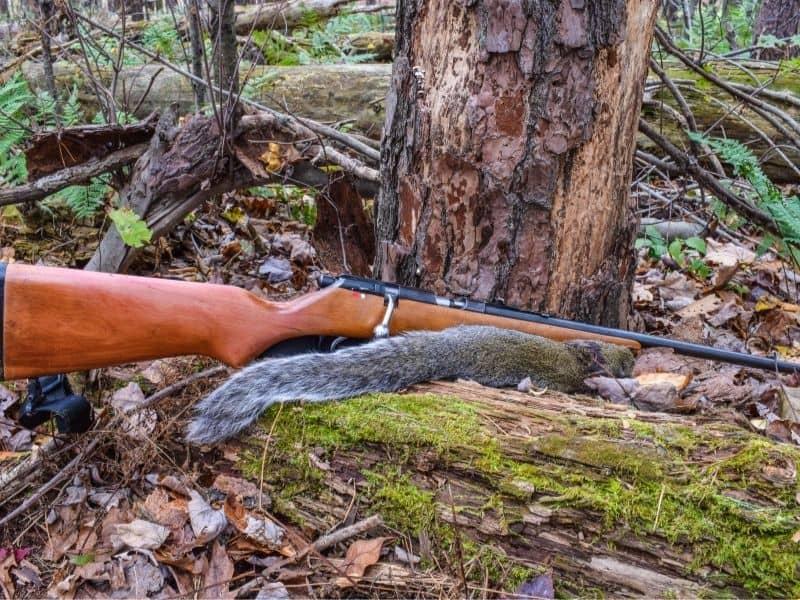 image of dead squirrel