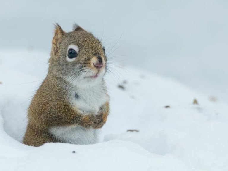 Four Reasons Why Do Squirrels Dig Holes