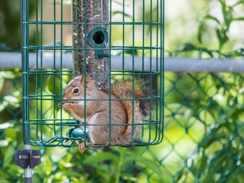 image of squirrel in cage