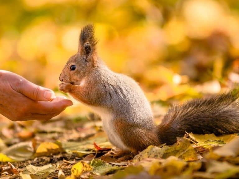Can Squirrels be Pets? Ultimate Guide