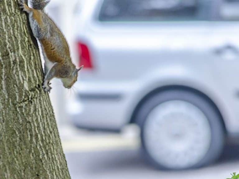 How to Squirrel-Proof Your Car: Per Pest Control Technician