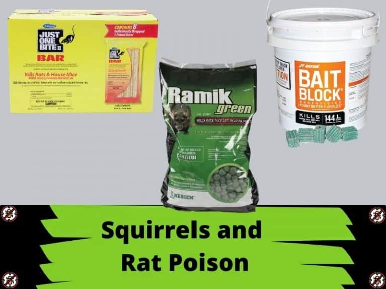 Will Squirrels Eat Rat Poison? Why or Why Not?