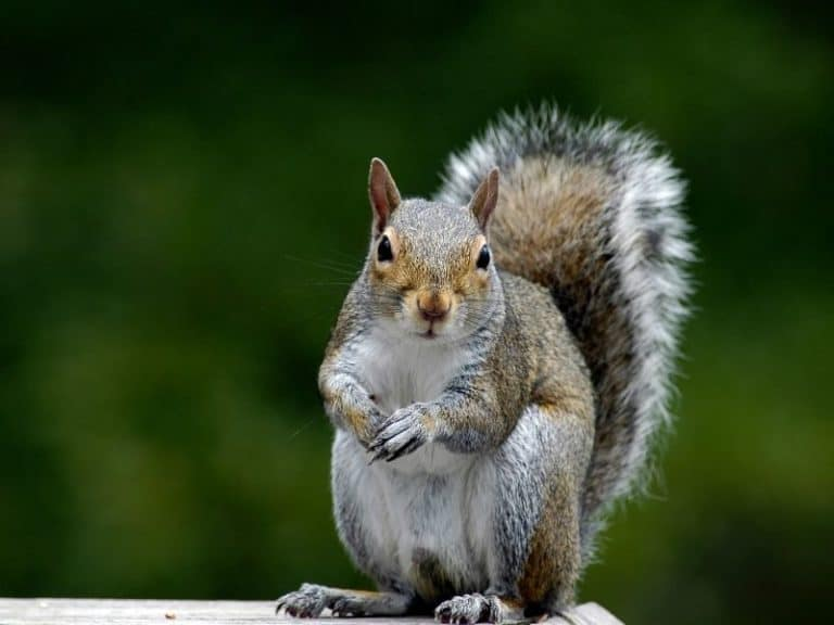 Can Squirrels Recognize Humans And Other Odd Things