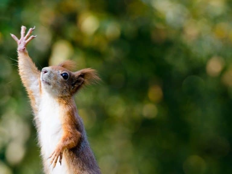 Can Squirrels Throw Things?
