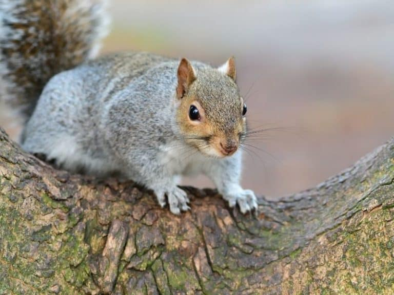 How to Keep Squirrels from Climbing Trees