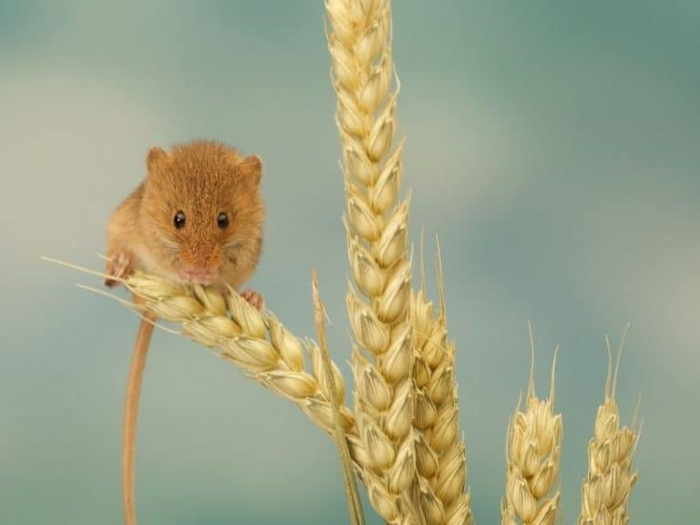 Top Nine Things That Attract Mice To Your Home